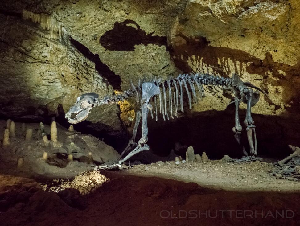 Höhlenbär Teufelshöhle