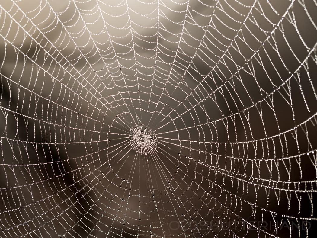 Tau auf Spinnenweben