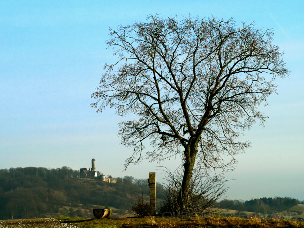 Altenburg mit Baum