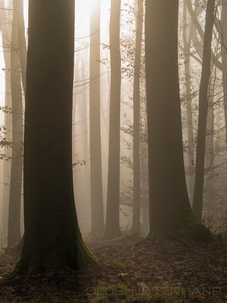 Nebel im Bruderwald