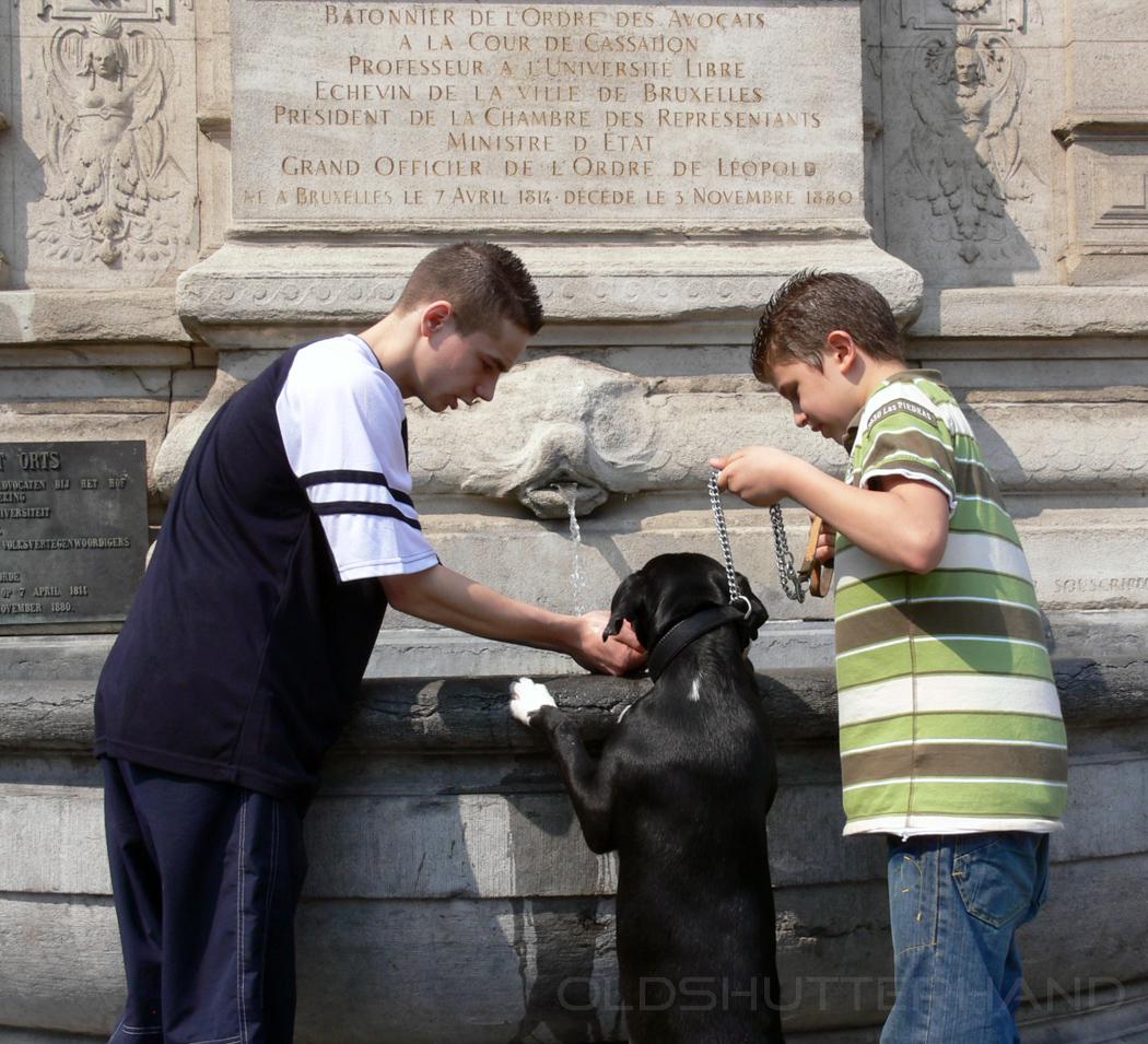 zwei Jungen helfen dem Hund beim Trinken