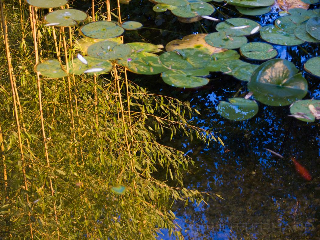 Bambus am Teich