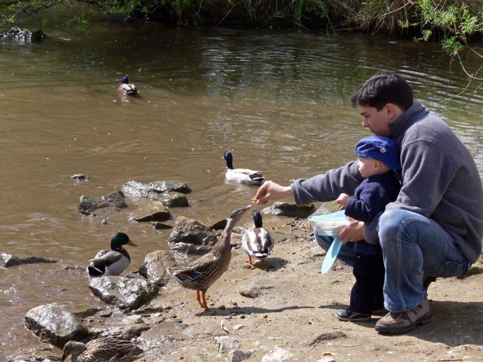 Josuel und Samuel beim Entenfüttern