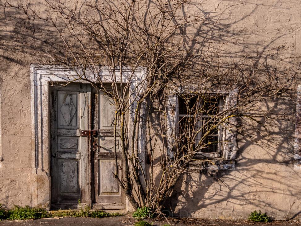 zugewachsene Haustür