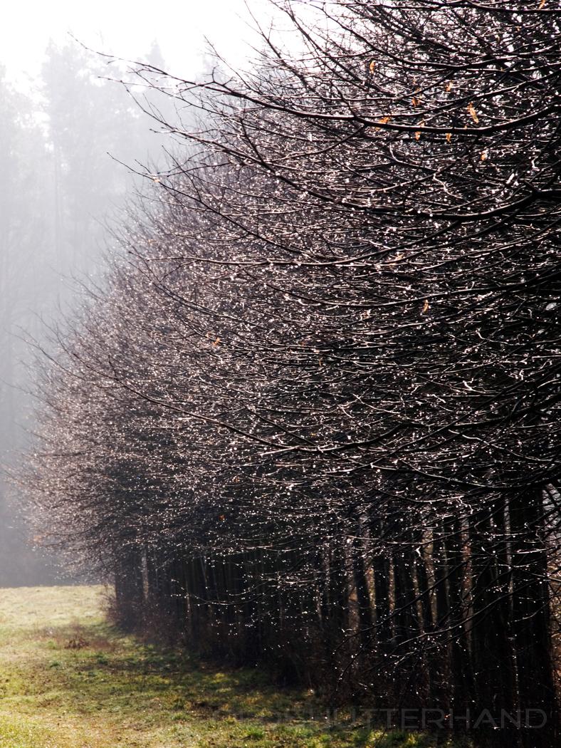 am Bruderwald