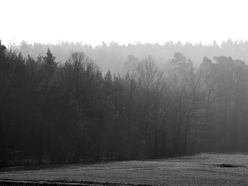 Bruderwald