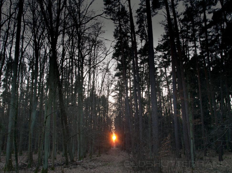 Bruderwald Sonne