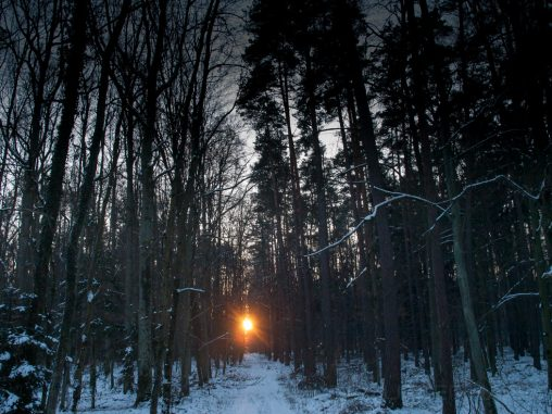 Sonne Bruderwald