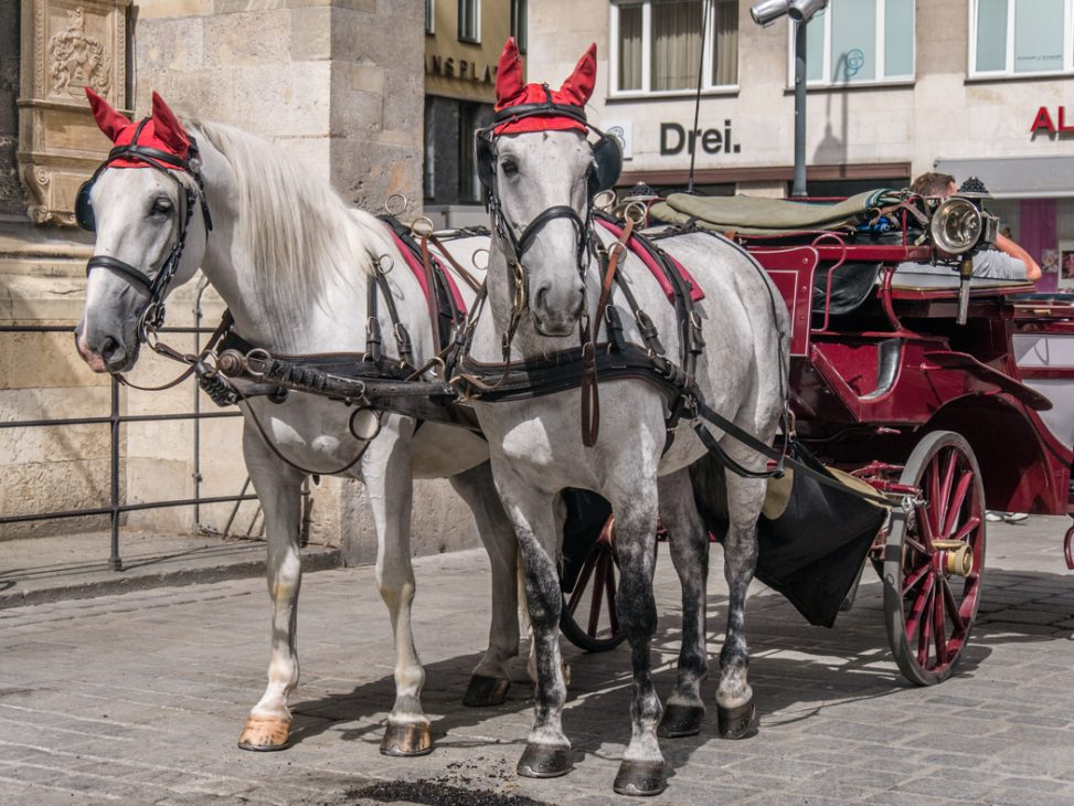 Fiakerpferde in Wien