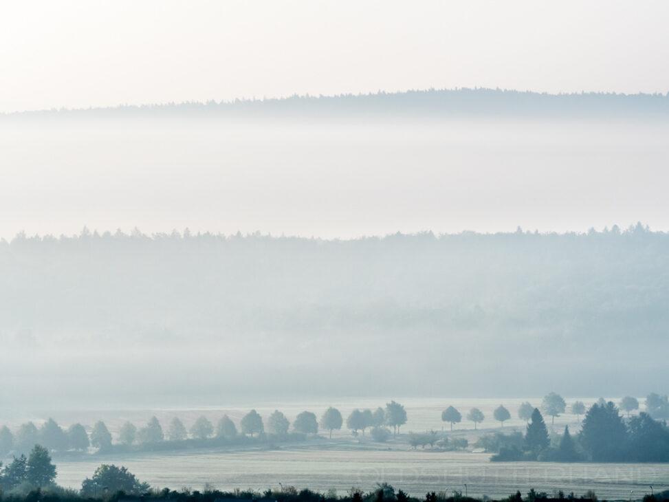 Blick auf den Bruderwald