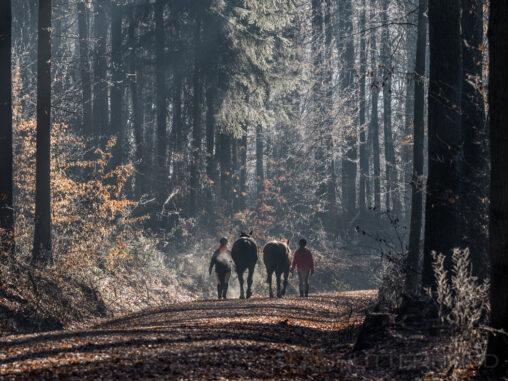 Reiterinnen im Bruderwald