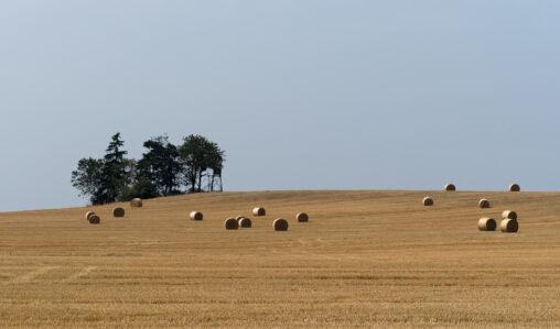 Strohballen auf einem Feld bei Drognitz