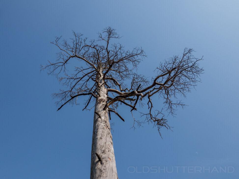 Verdorrter Baum