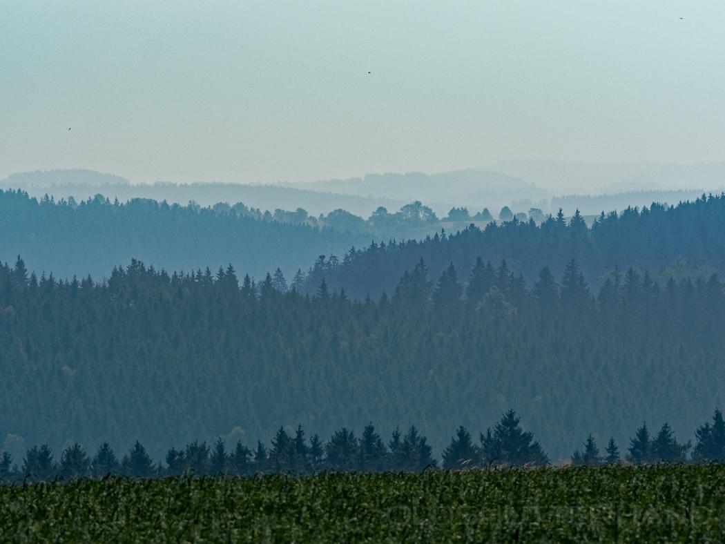 Wald bei den Saalestauseen
