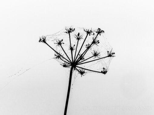 Spinnenetz auf Pflanze