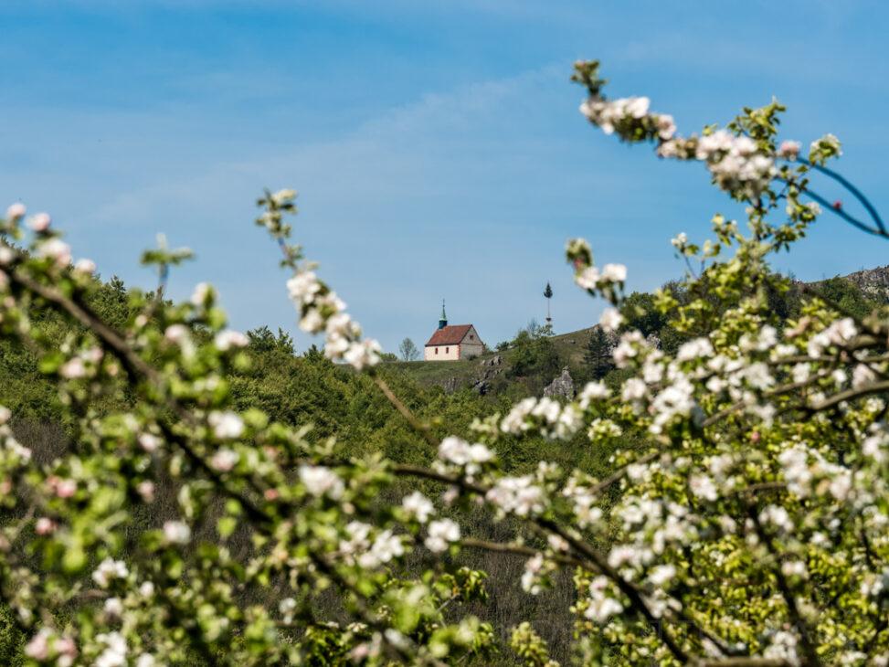 Kirschblüten Ehrenbürg