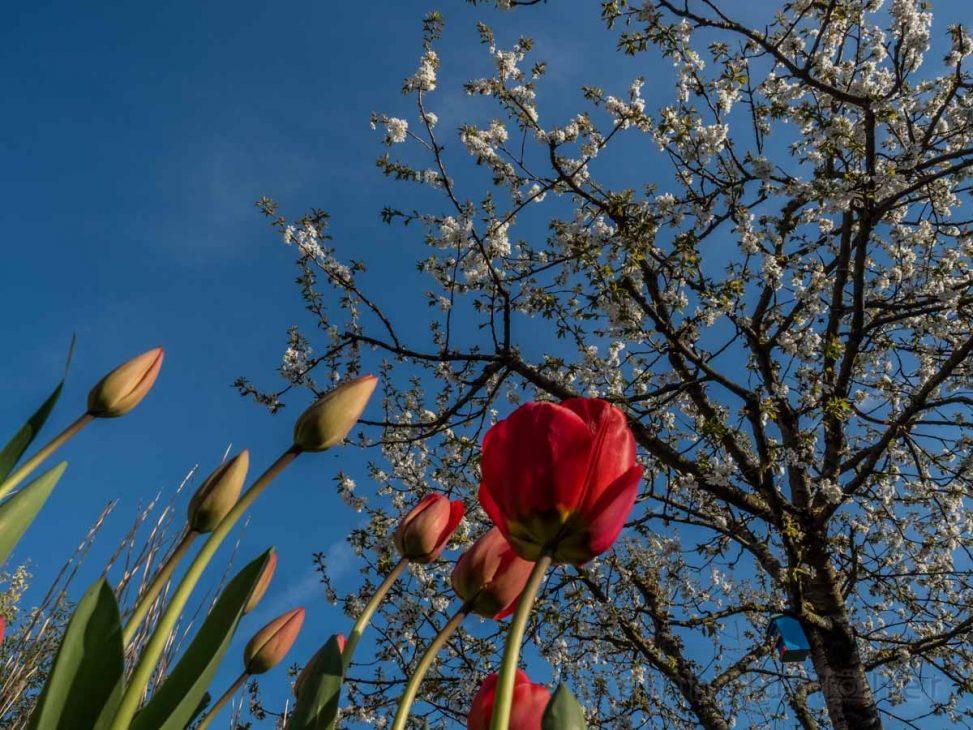 Blumen, Blüten, Frühling, Jahreszeiten