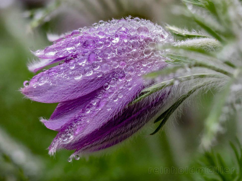 Frühling, Jahreszeiten, Stacking, Wassertropfen