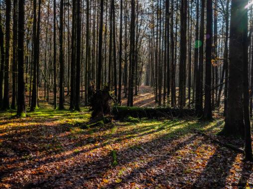 Im Bruderwald
