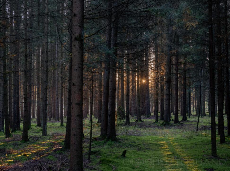 Wald in der Nähe von Azendorf