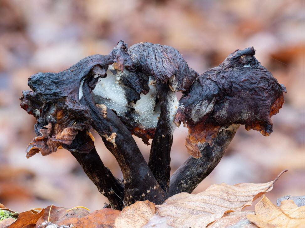 Überreste von Pilzen